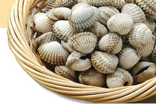 Bạn nên lựa chọn những con sò còn sống, không quá to cũng như quá nhỏ
