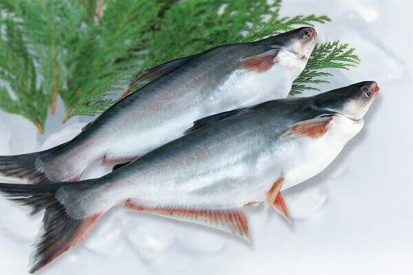 Cá ba sa có nhiều DHA và omega-3