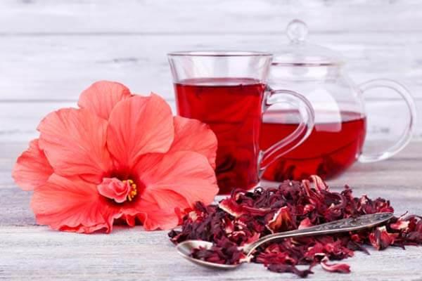 Cả lá, đài hoa Atiso đỏ giàu về Acid và Protein