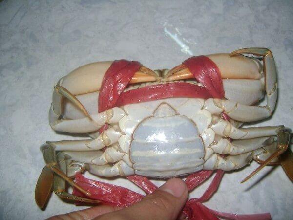 sơ chế cua biển đúng chuẩn