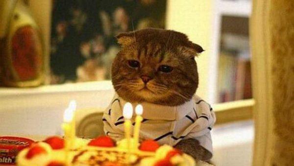 Những lời chúc mừng sinh nhật cho bạn trai ở xa hay ý nghĩa nhất (CMSN)