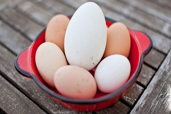Bà Bầu Ăn Trứng Ngỗng Vào Tháng Thứ Mấy - Chế Biến Trứng Ngỗng