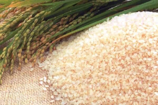 Bột bánh dẻo được làm từ gạo nếp