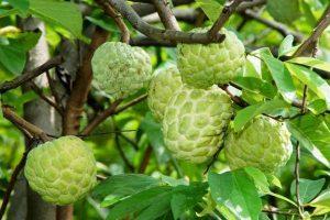 8 Loại Hoa Quả Trái Cây Phụ Nữ Sau Khi Sinh Nên Ăn