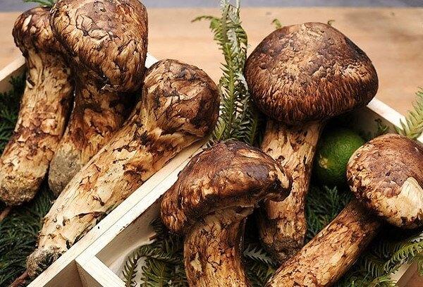 Nấm Matsutake vào đầu mùa thường có mức giá cao ngất ngưởng. Bạn có thể phải bỏ ra tới 2.000 USD để mua 1kg.