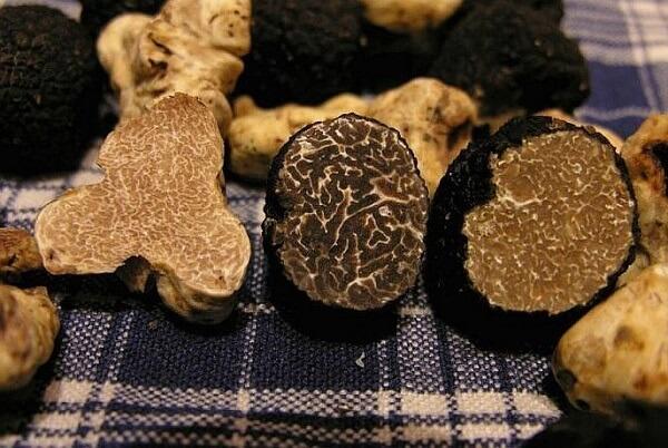 """Vì có giá """"trên trời"""" nên nấm Truffle luôn được săn lùng ráo riết."""