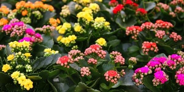 Hoa sống đời có rất nhiều loại khác nhau bông hoa với nhiều màu khác nhau