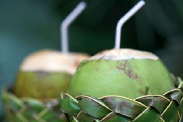 Chữa bệnh gút bằng lá trầu và nước dừa