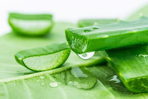 Dùng chất gel có trong nha đam, bôi gì sau khi nặn mụn