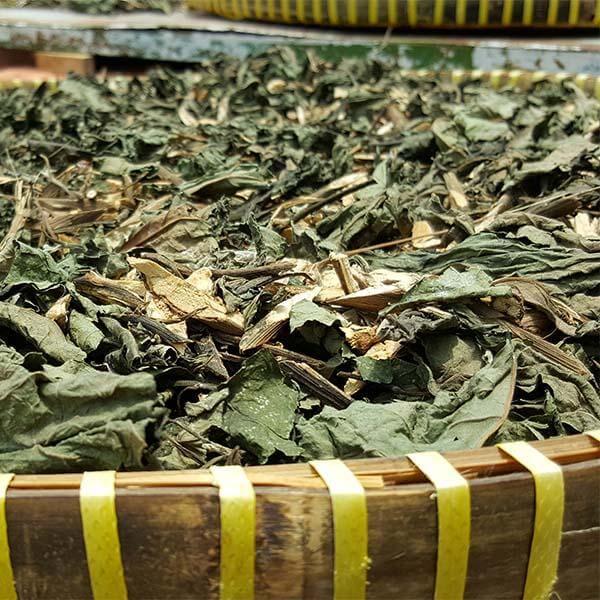 Cách dùng cây mật gấu ngâm rượu thuốc – Cong dung cua la mat gau