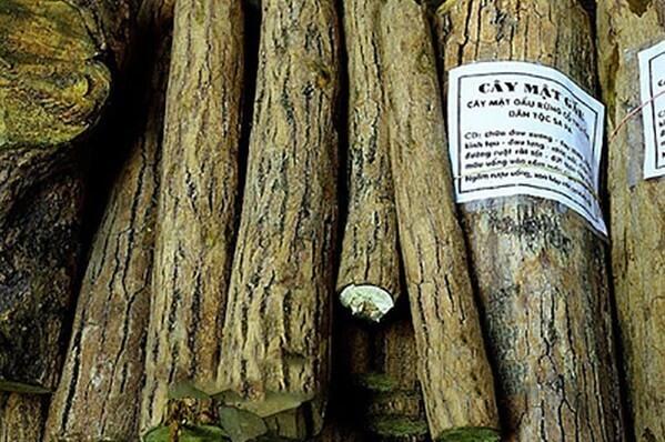 Một vài bài thuốc chữa bệnh từ cây mật gấu