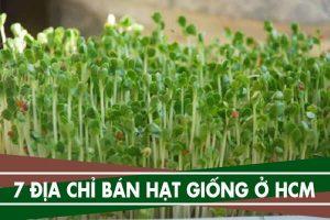 7 địa chỉ mua hạt giống rau mầm, giống cây trồng ở Tphcm