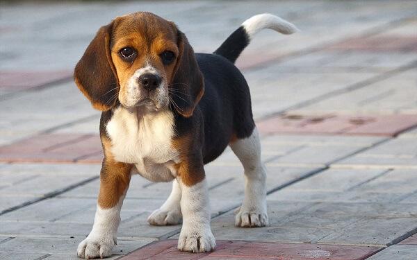 Hãy kể về một kỉ niệm đáng nhớ với con vật nuôi mà em yêu thích