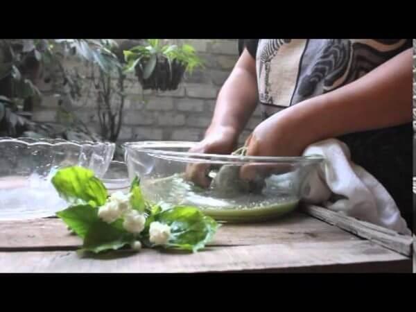 Vò nước lá thạch – cách làm thạch đen từ lá thạch