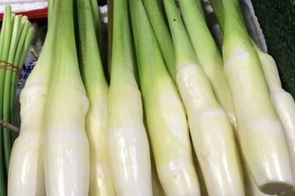 Cây củ niễng là một loại cây thảo, thường sống ở vùng ngập nước