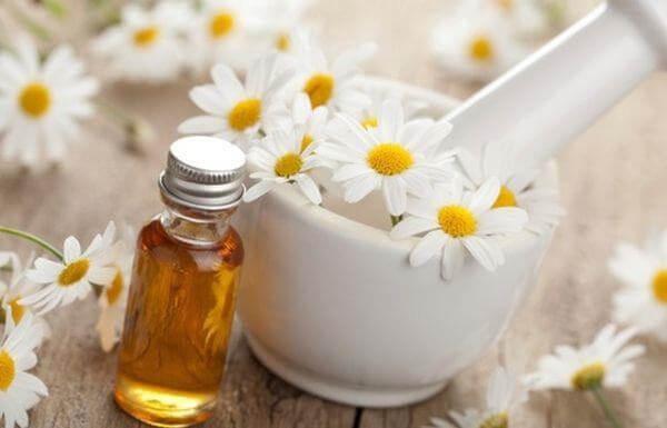 trà hoa cúc còn có tác dụng kháng khuẩn, chống vi khuẩn gây cảm cúm, giảm mỡ trong máu