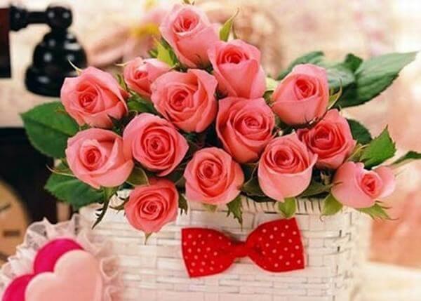 Hoa hồng lãng mạn