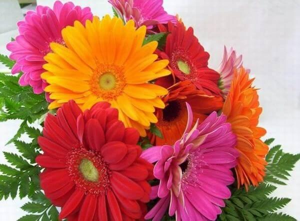 Các loại hoa chủ yêu để làm hoa tặng sinh nhật như hoa hồng, hoa lan, hoa hướng dương, hoa ly, hoa tulip,…