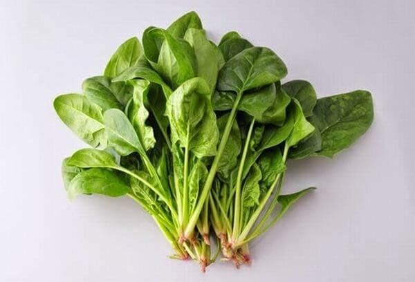Rau bina là rau gì, có phải là rau chân vịt, rau mồng tơi không?