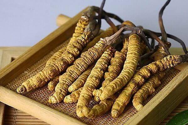 Tác dụng của đông trùng hạ thảo đến từ Trung Quốc