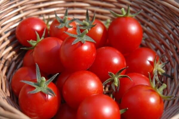 Cà chua loại nhỏ thường dùng để ăn sống